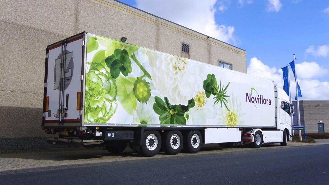 Noviflora 2